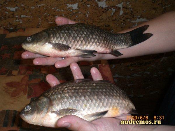 Рыбалка около Сызрани, село Троицкое
