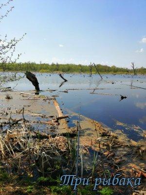 Рыбалка на болоте.Сызрань.