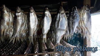 В Астрахани раньше времени пошла вобла. Рыбаки не спят.
