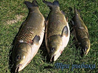Рыбалка в Калиновке